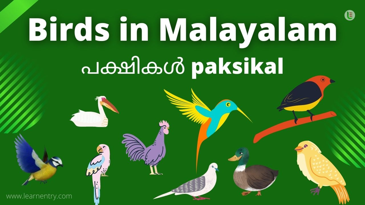 Birds in malayalam