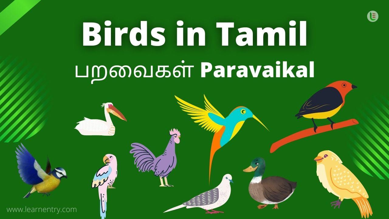 Birds in tamil