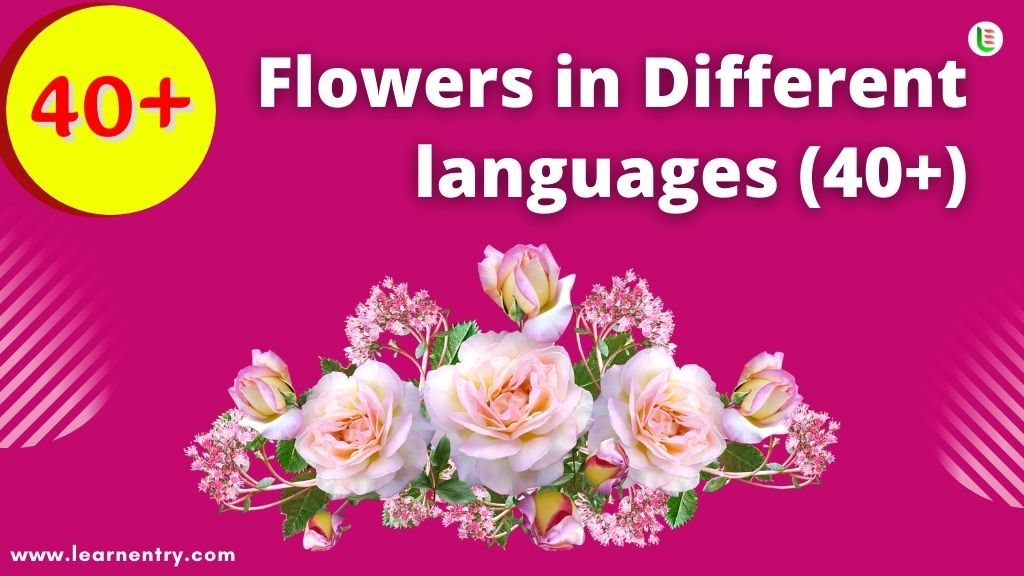 Flowers in different languages