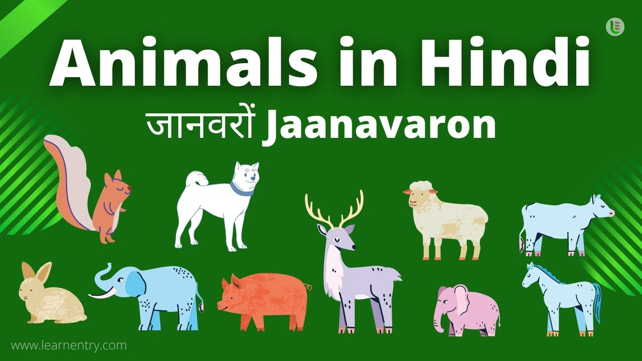 Animal in hindi