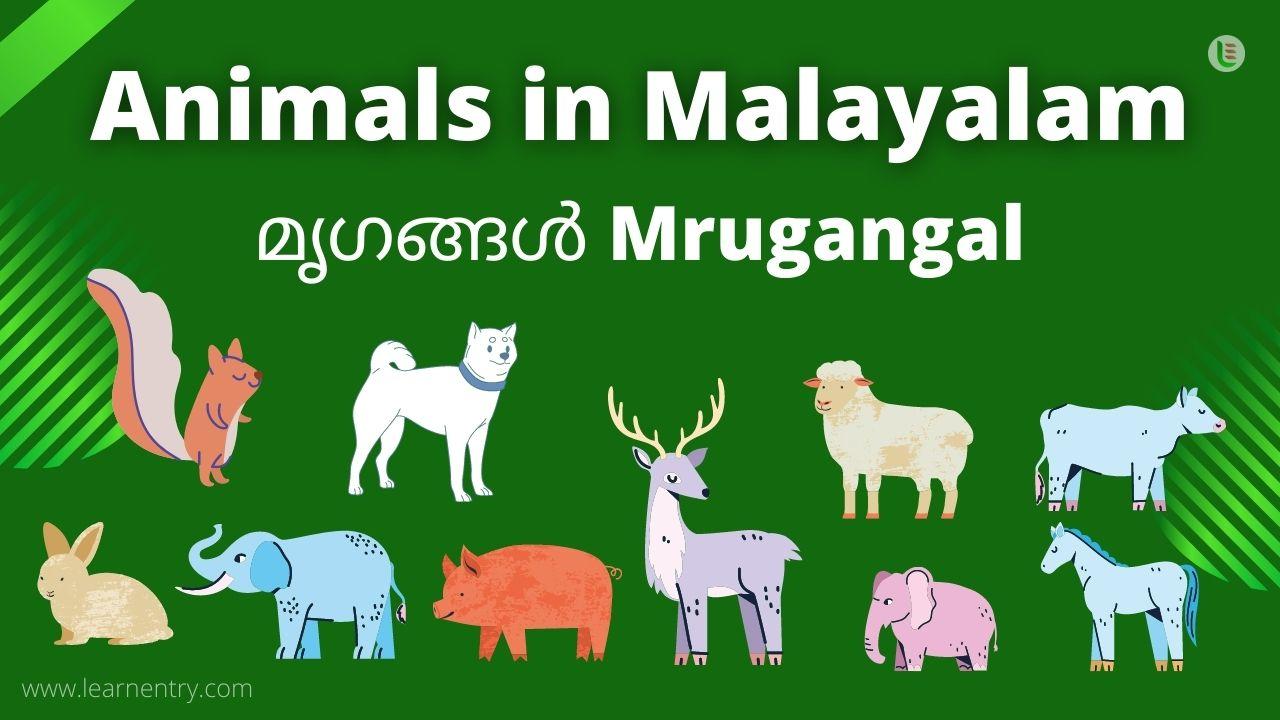 Animal in malayalam