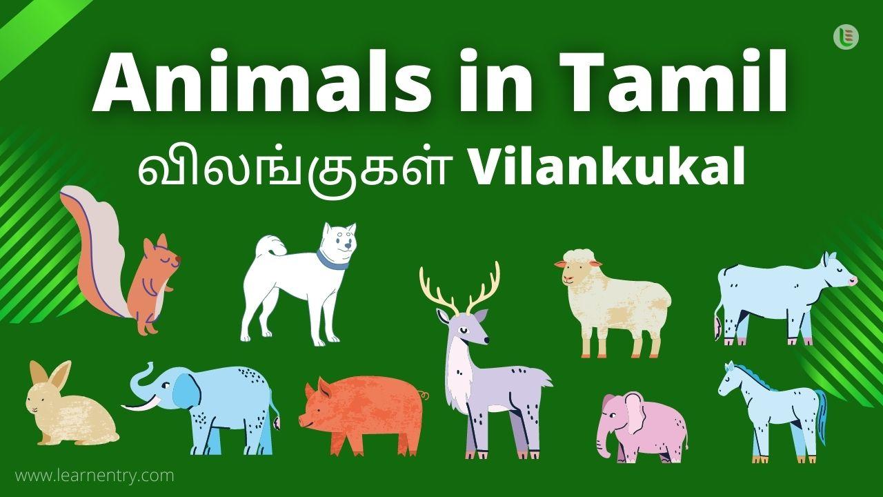 Animal in tamil