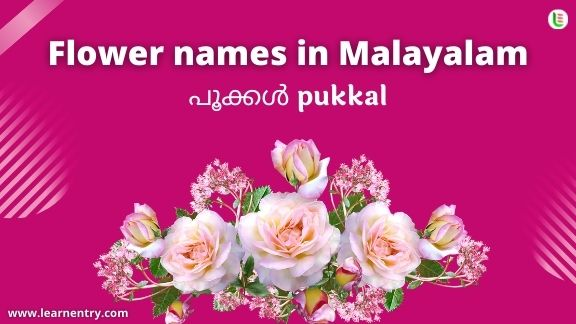 Flowers names in English & Malayalam